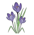 First spring flower vector image