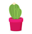flat cactus in pot vector image vector image