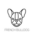 french bulldog linear face icon isolated outline vector image