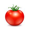 fresh red ripe tomato vector image vector image