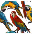 seamless background with ara parrots vector image
