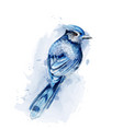 Cute blue bird watercolor isolated on white
