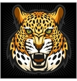 jaguar portrait Jaguars head on black vector image vector image