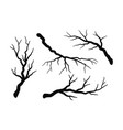 tree branch without leaves silhouettes set vector image vector image