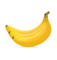 bananas on white background vector image vector image