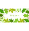 natural banner with stylized green leaves spring vector image vector image