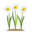 spring narcissus flowers background vector image vector image