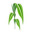 tropical plant isolated vector image