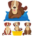 cute dogs in different actions vector image vector image