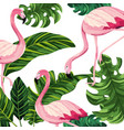 tropical flamingos cartoon vector image