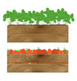 wooden box with strawberry vector image