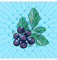 blueberry twig with green leaves on a blue vector image vector image