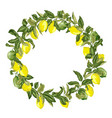 citrus wreath in graphic with branches with vector image