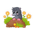 cute little mole peeks out burrow vector image vector image