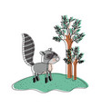 raccoon cartoon in forest next to the trees in vector image