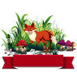 Banner design with red fox vector image vector image