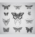 butterflies graphic vector image vector image