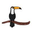 toucan in branch tropical bird icon vector image vector image
