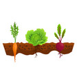 vegetables growing in ground one line cabbage vector image vector image