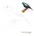 Blue necked tanager bird learn to draw vector image vector image