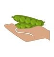 hand human with fresh vegetable isolated icon vector image