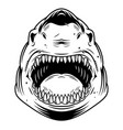 vintage monochrome angry scary shark head vector image