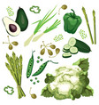 set of ripe green vegetables vector image