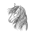 Black horse mustang sketch portrait vector image vector image