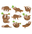cartoon sloths family adorable sloth animal at vector image vector image