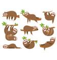 cartoon sloths family adorable sloth animal vector image vector image