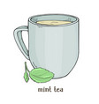 cup tea with mint leaves on white background vector image vector image