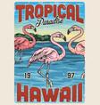 hawaiian exotic vintage colorful poster vector image