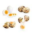 realistic quail eggs set vector image vector image
