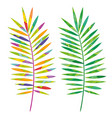 tropical leafs decoration floral vector image vector image