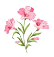 Alstromeria branch isolated on white vector image