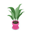 beautiful flower in pot isometric 3d icon vector image vector image