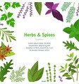 cartoon color herbs spices card vector image vector image