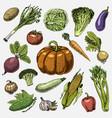 set hand drawn engraved vegetables vegetarian vector image
