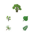 flat icon nature set of acacia leaf garden vector image