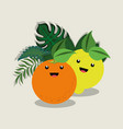 citric fruits design vector image vector image
