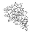 hand drawn floral composition with roses vector image vector image