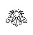 black and white moth or butterfly with folded vector image vector image
