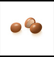 brown nuts whole hazelnut or macadamia on white vector image