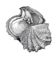 high detail oyster pearl engraving vector image