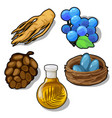 plants and eggs in nest food and animal concept vector image vector image