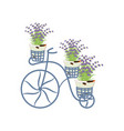 vintage bycicle with lavender vector image