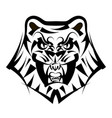 head tiger on a white background vector image vector image