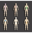 Human organs and body systems vector image vector image