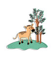tiger cartoon in forest next to the trees in vector image vector image