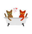 cat lovers in bath lover joint bathing pet vector image